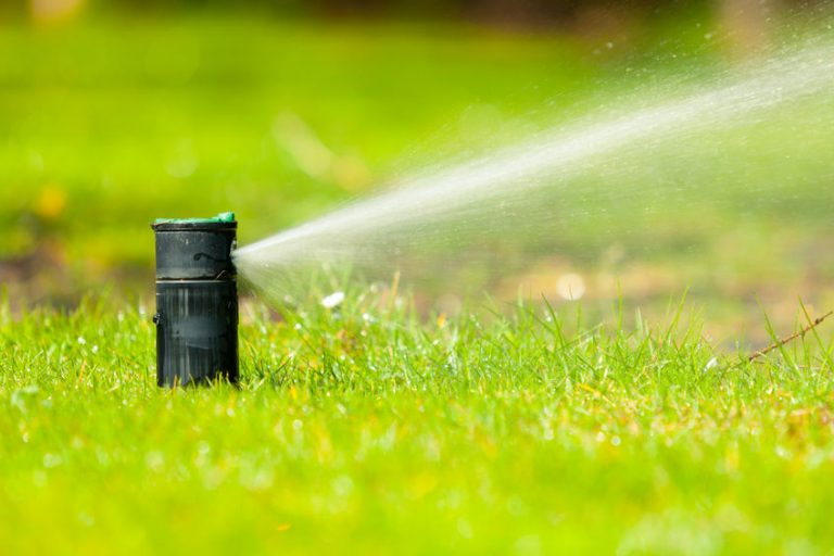 backyard irrigation system