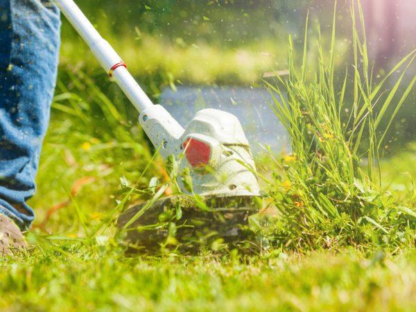 maintenance on a garden