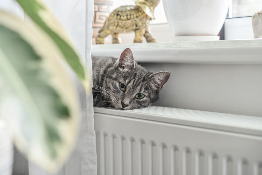 cat over a oil radiator