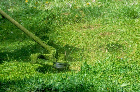 cortar relva no parque