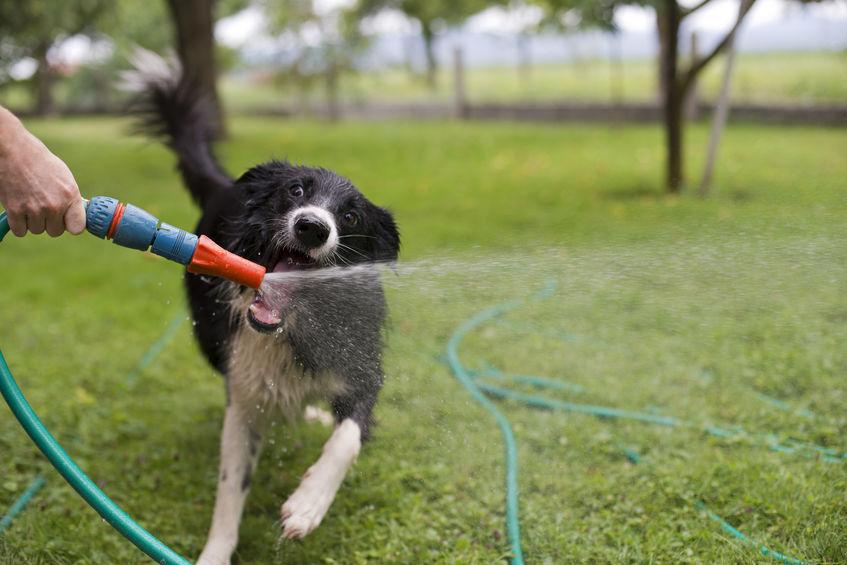 cachorro brincando com água