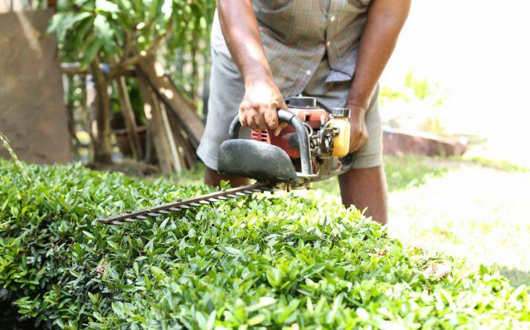 manutenção de arbustos