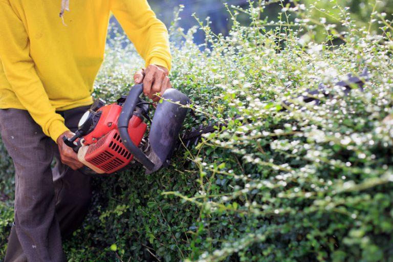 aparar peças de arbustos