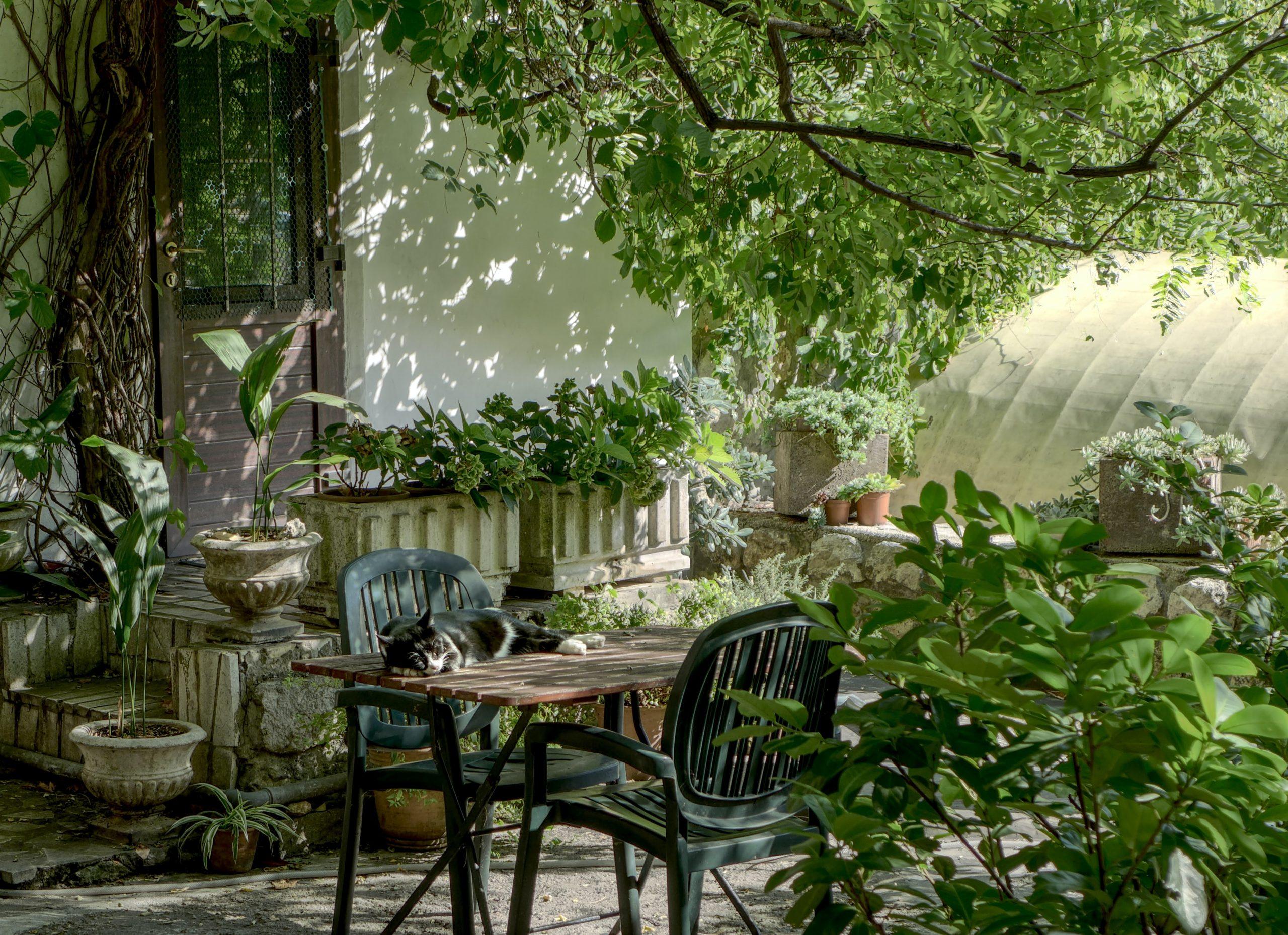 Sillas y mesa en jardin con gato durmiendo en la mesa