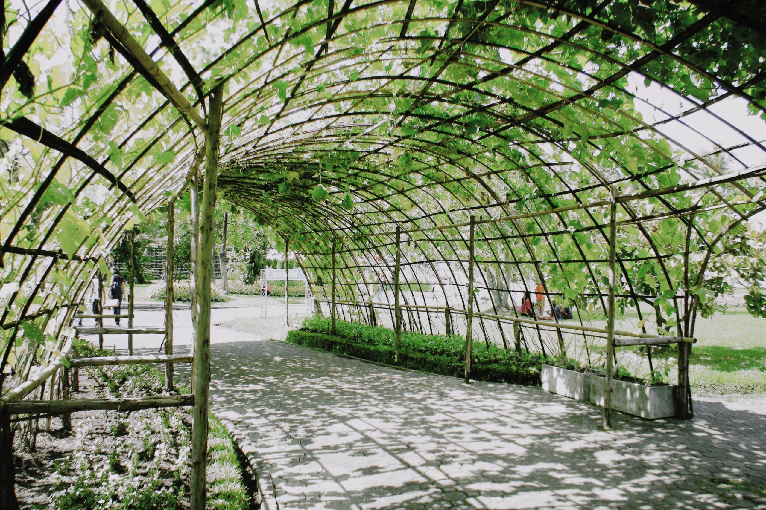 camino rodeado de plantas