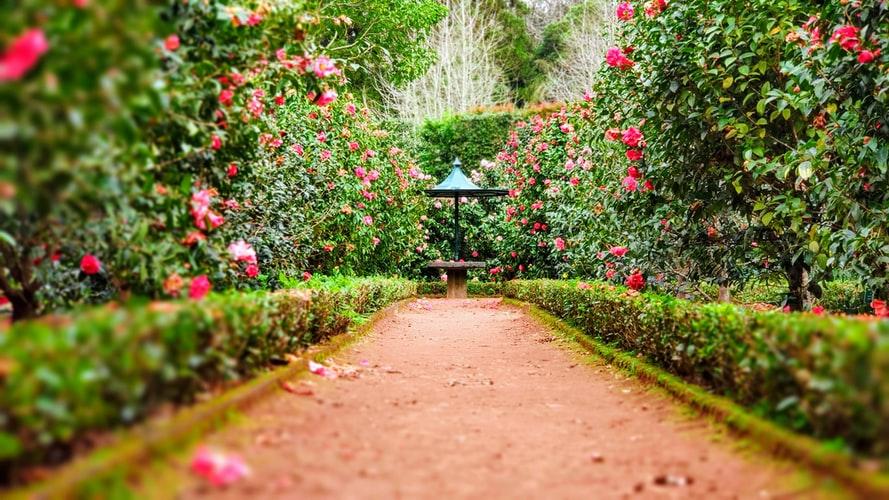 jardin bien arreglado