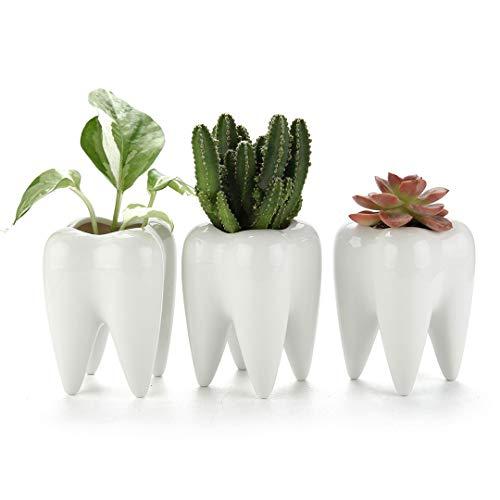 T4U Pequeno Fofo Planta de Dentes Suculentas Potes – Porta-Lápis Dentes Presente para Dentista – Mini Vasos de Cerâmica Branca para Suculentas Ervas Cacto – Pacote com 3 Contêiners de Plantas Pequenas